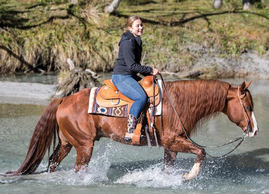 Medima Produkttest im Quarter Horse Journal